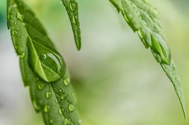 Washington eyes new marijuana DUI testing technology