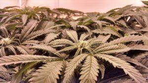 Lawmakers send medical marijuana plan to Gov. Kasich